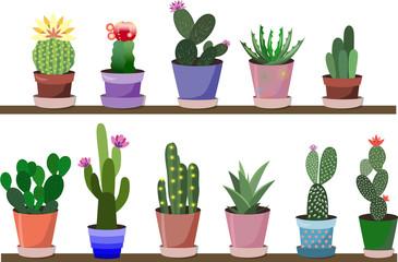 25_kaktusy