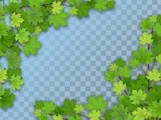 Set of realistic vector tree branches with green leaves. Element of natural design. Isolated on a transparent background.