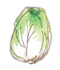 漬物にしたらおいしい野菜シリーズ_白菜