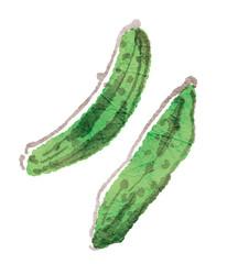 物にしたらおいしい野菜シリーズ_胡瓜