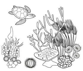 Coloring page. Coral reef with turtle and other marine animals