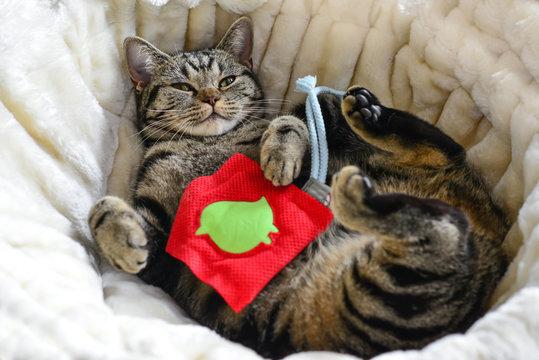 Katze kuschelt mit Spielkissen