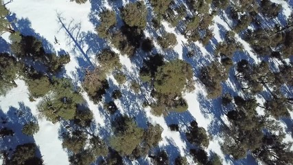 Wall Mural - Aerial top view of the snow-capped Atlas mountains covered with forest in Morocco at winter, 4k