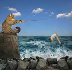The cat is fishing on the stones in the sea.