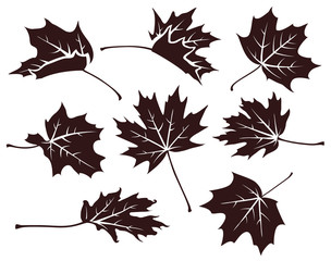 Set of decorative autumn maple leaves. Vector leaf silhouette isolated on white