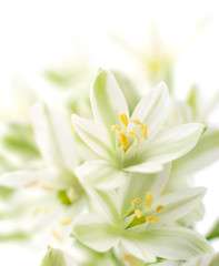 white flowers background