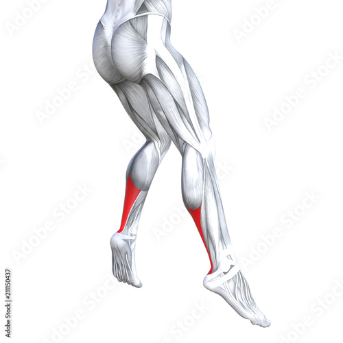 Concept conceptual 3D illustration fit strong back lower leg