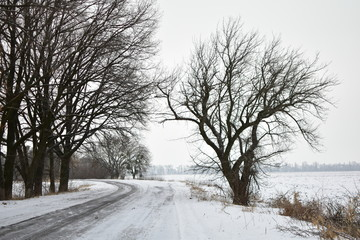 the road in winter on a cloudy day