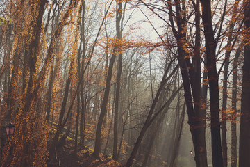 Beautiful morning in the misty autumn park with sun rays. Fall. Toned