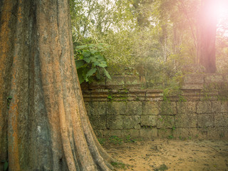 Giant tree roots covering Ta Prom temple, Siem Reap, Cambodia, landmark in Siem Reap, Cambodia. Angkor Wat inscribed on the UNESCO World Heritage List. Archaeological enclosure.