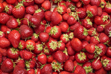 Summer background.Background from fresh and tasty sweet strawbrries. Top view . Organic concept