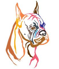 Colorful decorative portrait of Dog Boxer vector illustration