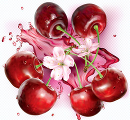 Cherries and flower on transparent