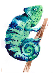 Chameleon. Watercolor illustration