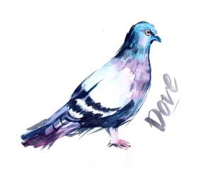 Watercolor dove