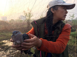 Liu Yidan, a bird conservationist and wild animal campaigner based in eastern China, frees a spotted dove from an illegal bird net in Yingdong
