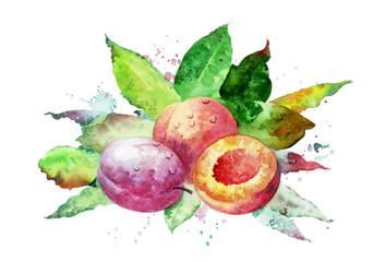 fruits_004