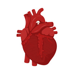 Human heart anatomy. Medical science vector illustration. Education illustration