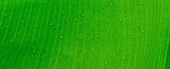 Green leaves natural background wallpaper, leaf texture, green leaves wall background