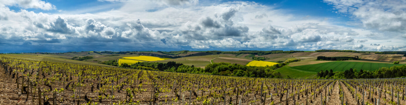 Vineyards in the Chablis region of Burgundy, France