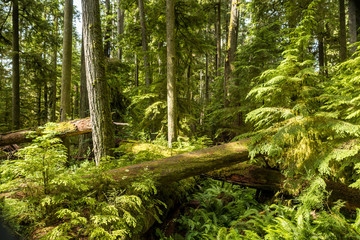 lush forest with tree trunks laying around covered with green mosses