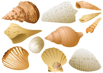 Isolated Seashell Set on White Background - Colored Illustration of Underwater Life, Vector