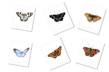Polaroidfotos von Schmetterlingen