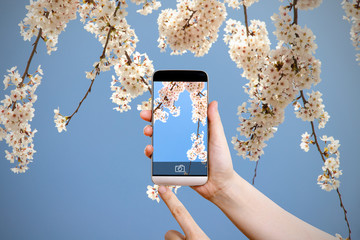 pictures of cherry blossoms using a smartphone