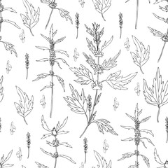 Seamless floral pattern Motherwort flower hand drawn vector isolated on white background, herbal medical sedative plant, Organic food ingredient illustration for healthy market, pharmacology, cosmetic