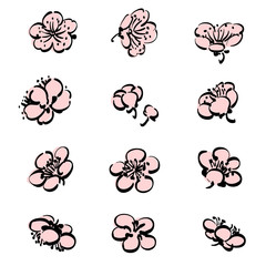 Plum flower vector. Pink floral icons and  elements decoration card.