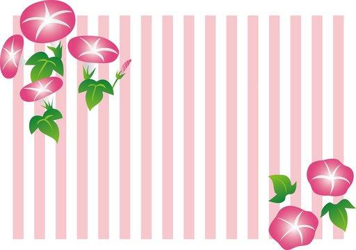 朝顔のタイトル枠(ピンク)