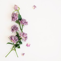 Flowers of dried roses lie on a white background