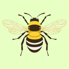 humblebee  vector illustration flat style  front side