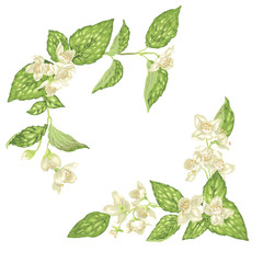 Corner decor elements with jasmine flowers bloom branches in realistic graphic vector illustration