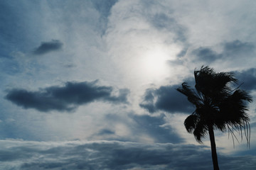Clouds, sun and silhouette of the palm. Film effect