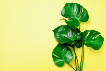 Green monstera leaves on yellow background with copy space. Top view. Minimal design. Exotic plant. Creative summer flat lay. Pop art trend Wall mural