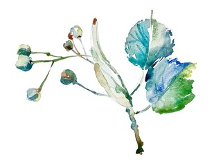 hand drawing watercolor botany element