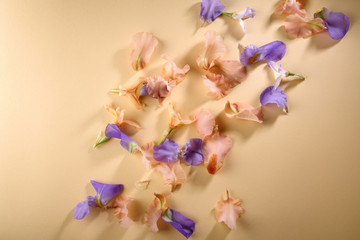 flowers petals background