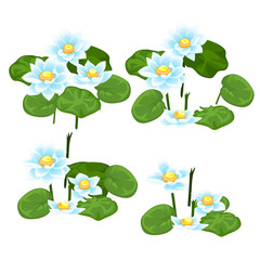 Set of stages for the destruction of landings of blue water Lily isolated on white background. Vector cartoon close-up illustration.