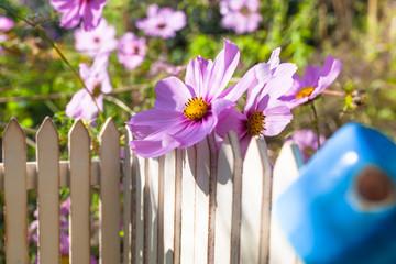 Nostalgic Miniature Garden Scene / Detail of small nostalgic miniature garden fence with big Cosmea flower and rusty pot upside down on top