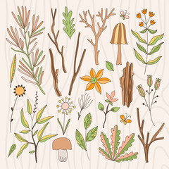 Forest plants, tree branches and flowers collections. Hand drawn wood illustration set