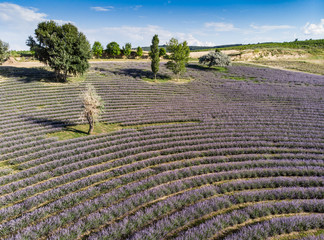 beautiful lavender  flowers from above