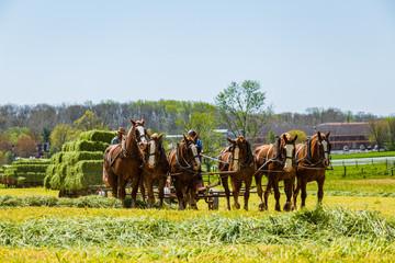 Amish Farmers Harvest Hay