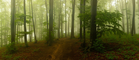 Papiers peints Forets Panorama of foggy forest. Fairy tale spooky looking woods in a misty day. Cold foggy morning in horror forest