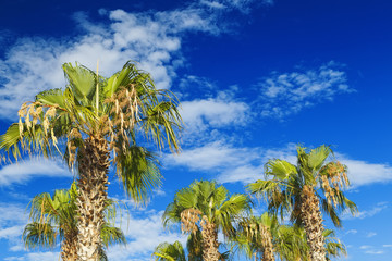 palm trees on blue sky and white clouds. Travel and resort concept.