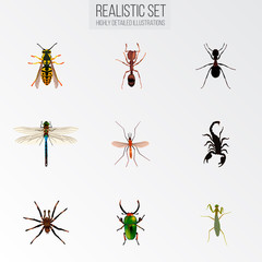 Set of insect realistic symbols with ant, dragonfly, pismire and other icons for your web mobile app logo design.