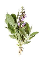 Salbei mit Blüte