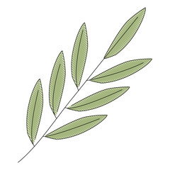 branch foliage leaves natural botanical vector illustration drawing