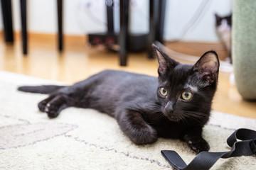 Black funny kitten sits on a green sofa