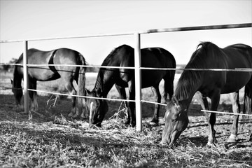 horse family eats grass